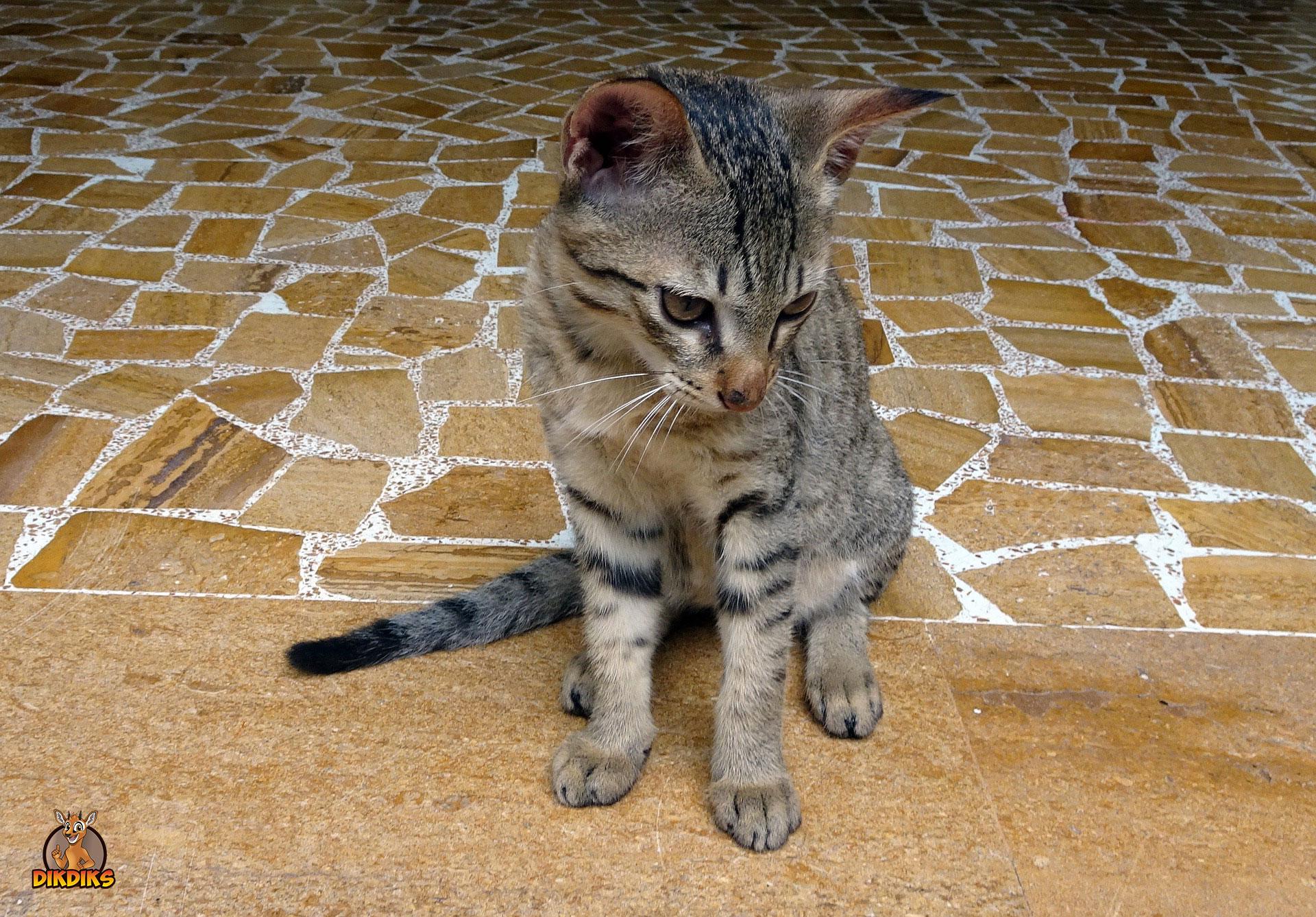 Bengalkatze-Kitten-Erziehung