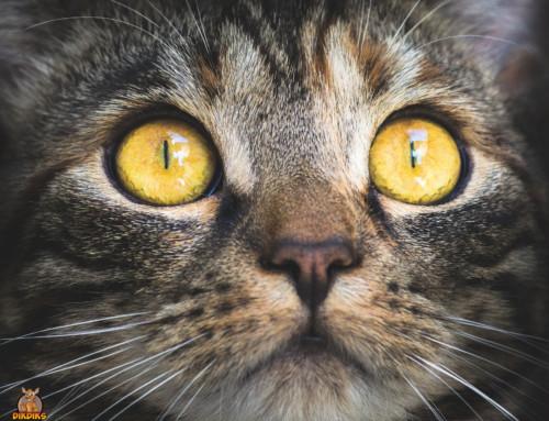 Artgerechte Katzenhaltung in der Wohnung möglich?