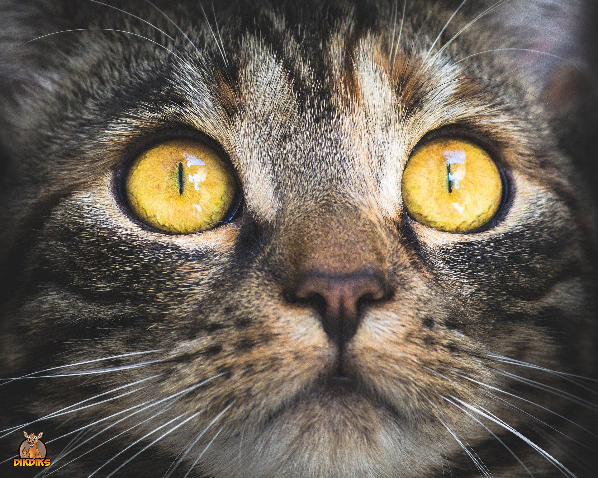 Artgerechte-Haltung-Katze