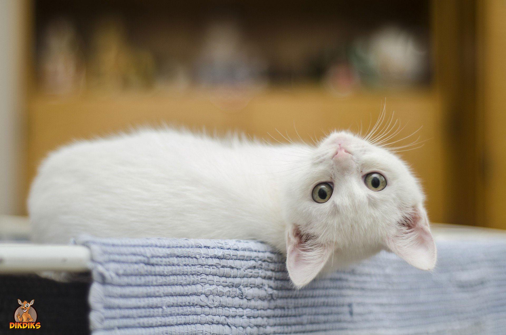 Bedürfnisse-Katze