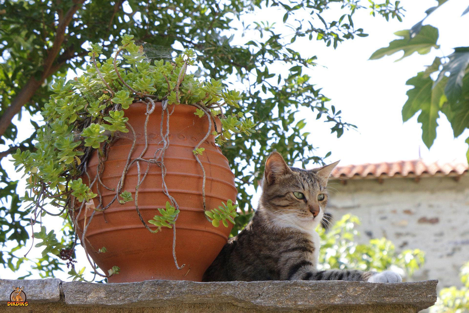Katze-im-Urlaub-dabei