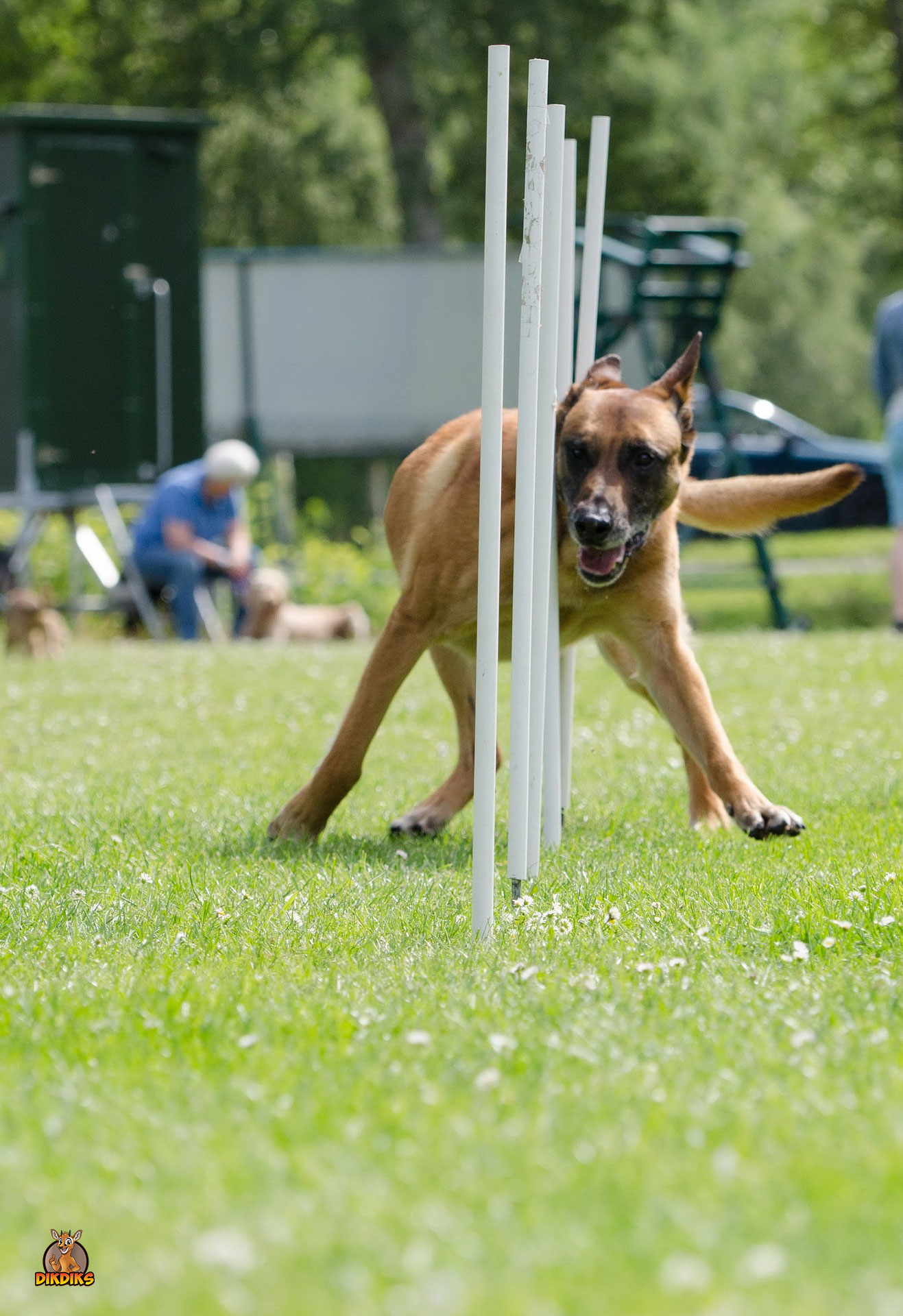 Malinois-beim-Sport-Hundeplatz