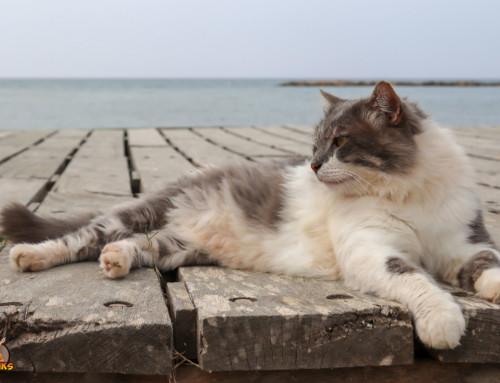 Das Reisen mit Deiner Katze