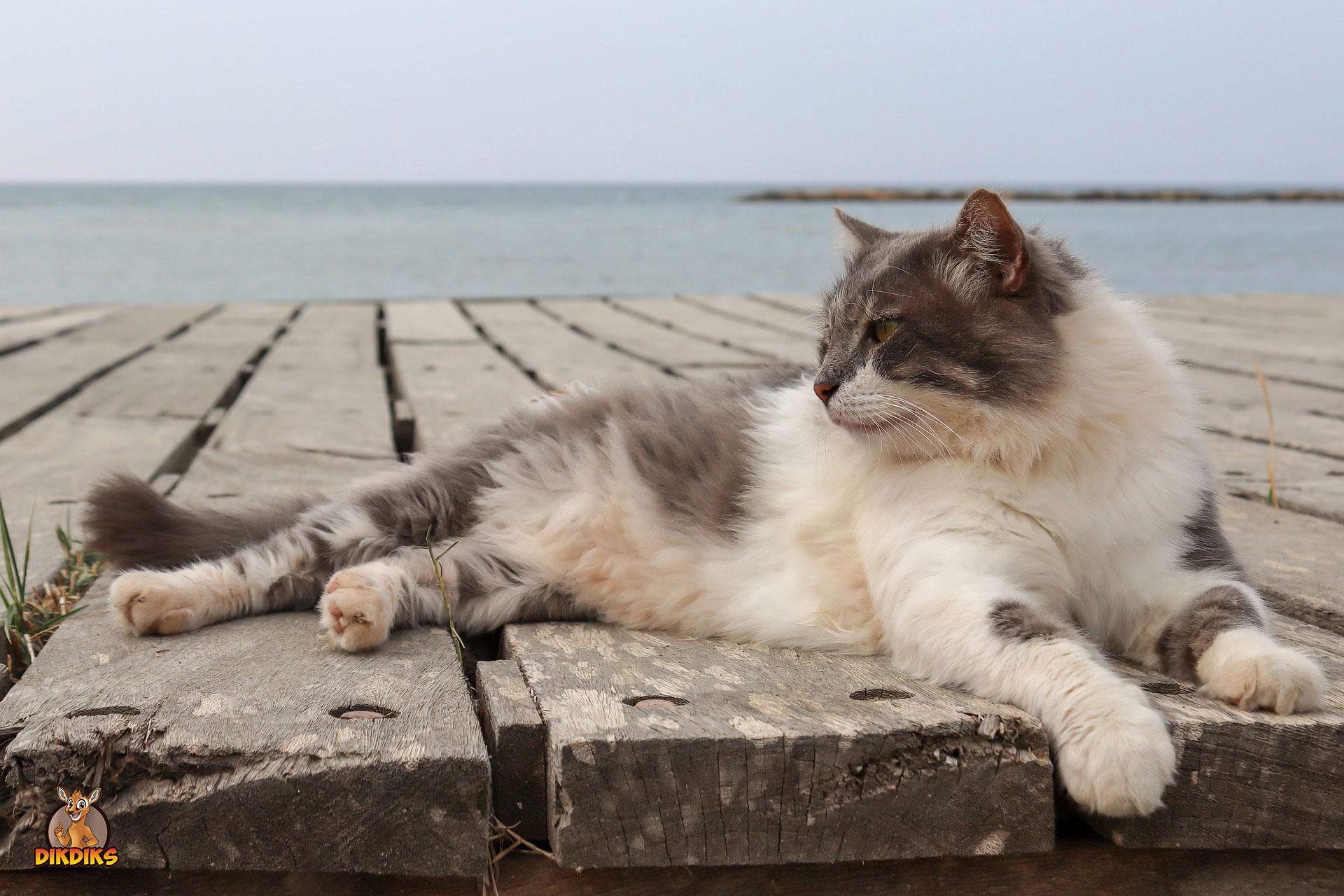 Verreisen-mit-der-Katze