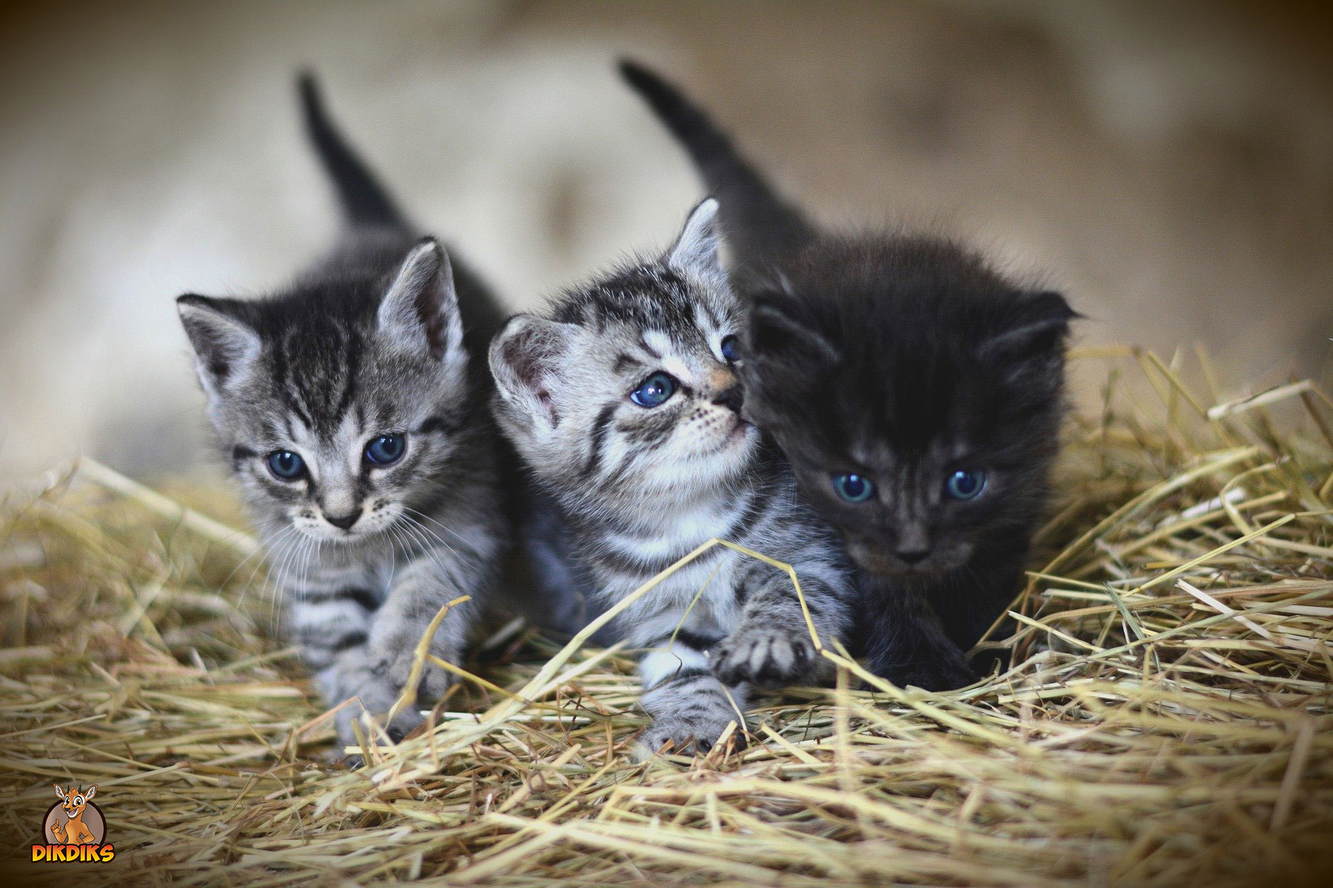 Privathaftpflichtversicherung-bei-Katzen
