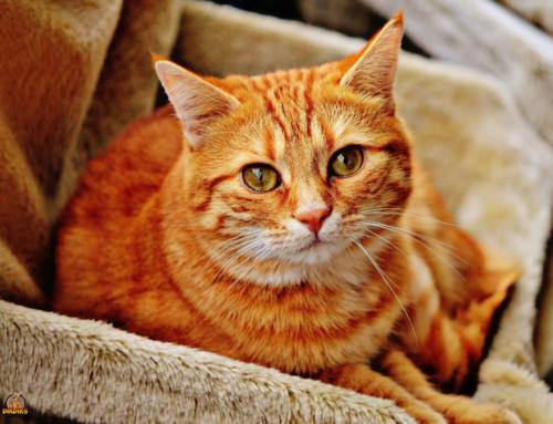Versicherungen rund um Deine Katze
