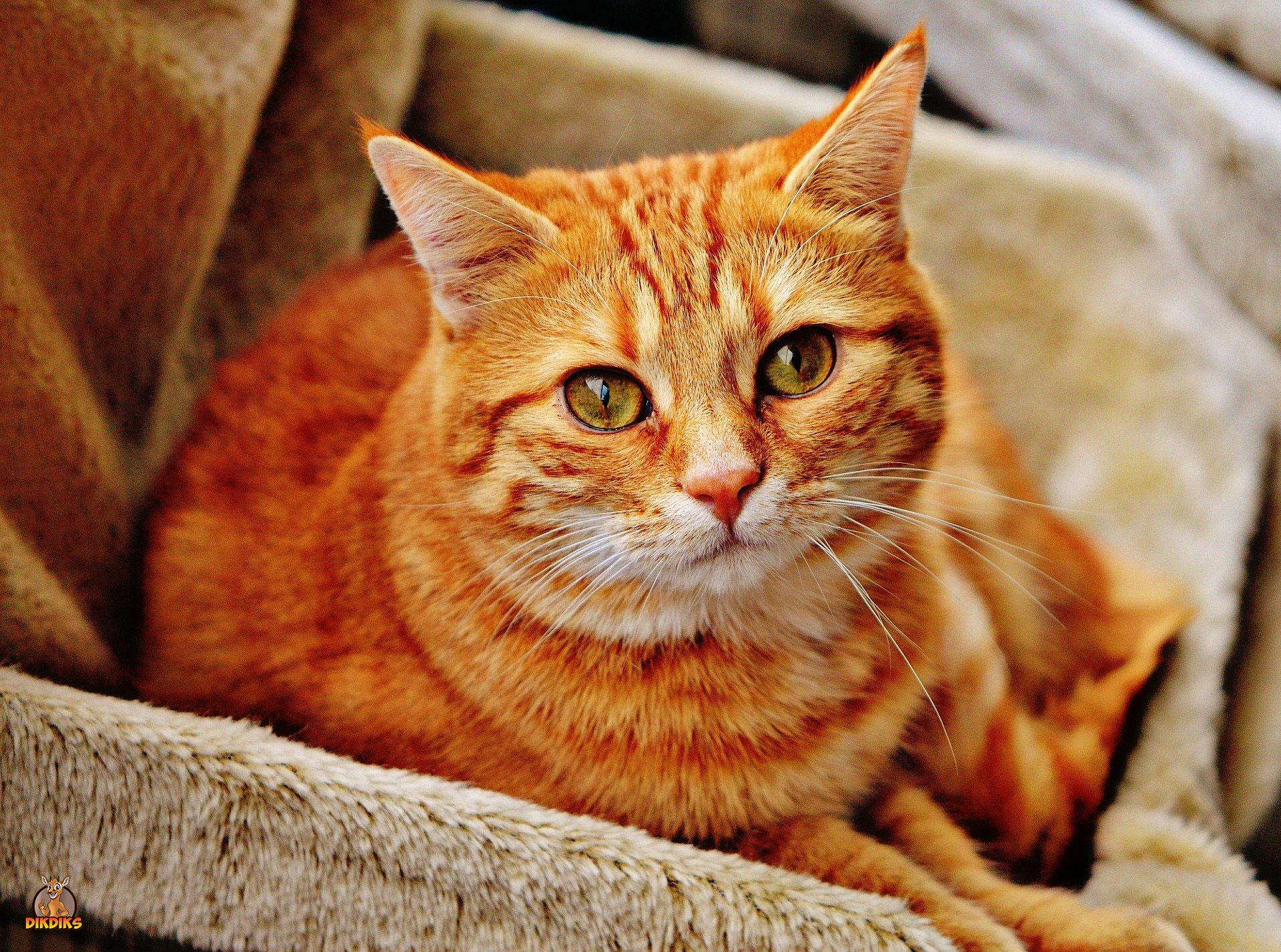 Versicherung-für-die-Katze