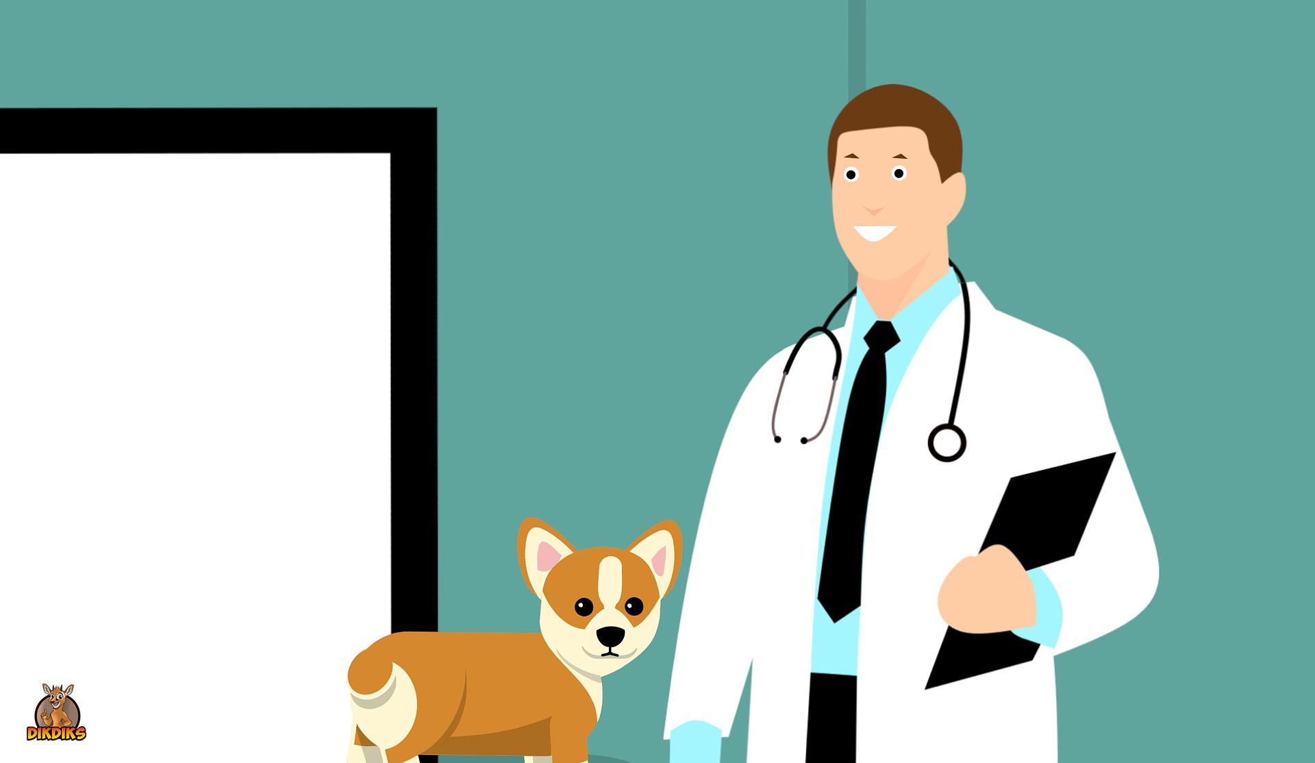 Pudel-beim-Tierarzt