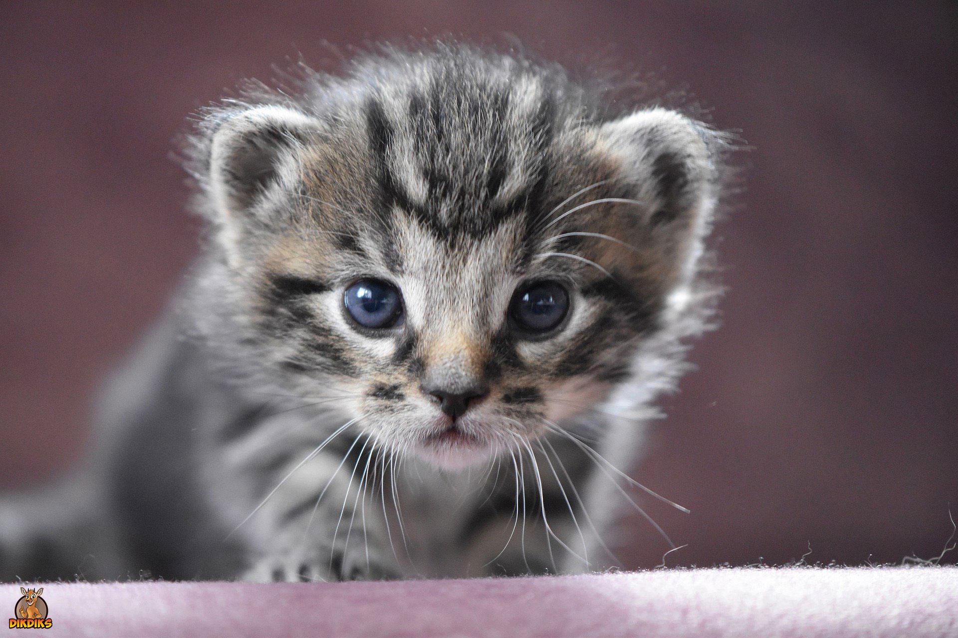 Kitten-nach-Hause-holen