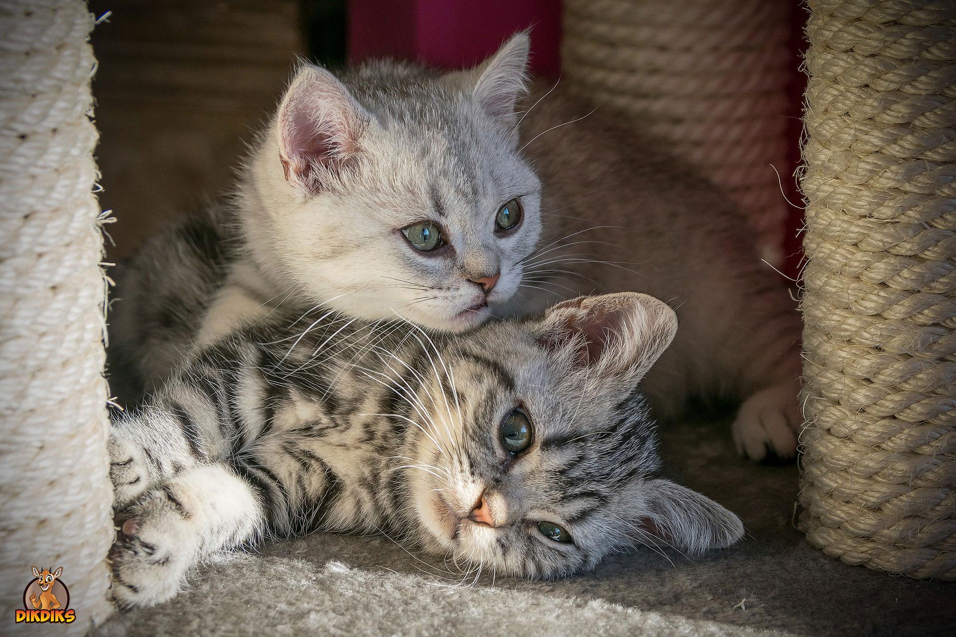 Krankheiten-bei-Babykatzen
