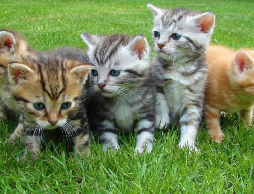 Auf der Suche nach einem Kitten? Das solltest du unbedingt vor der Anschaffung beachten!
