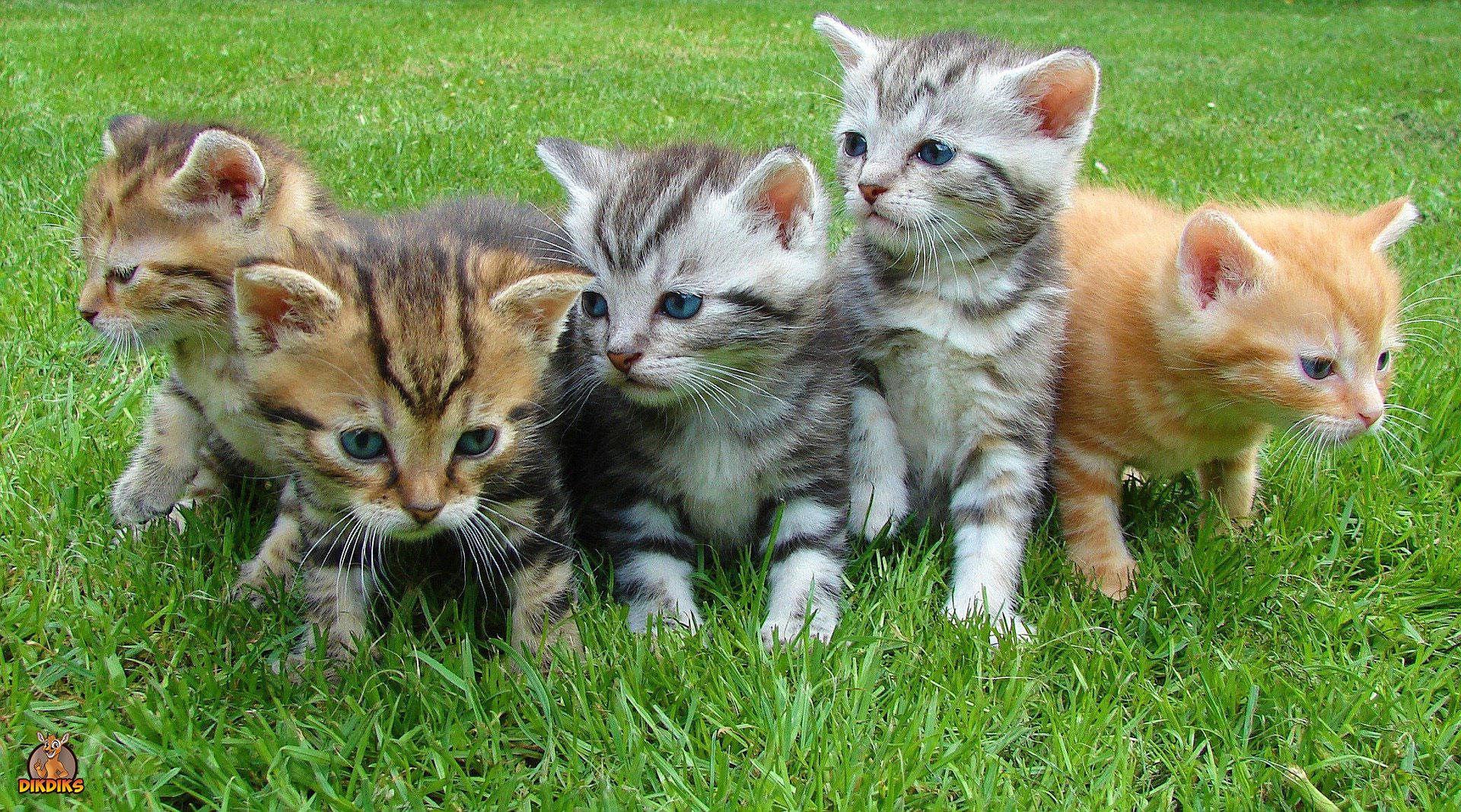 Suche-nach-einem-Kitten