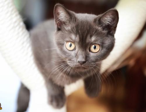 Entwicklung eines Katzenbabys – eine aufregende Zeit mit großen Sprüngen