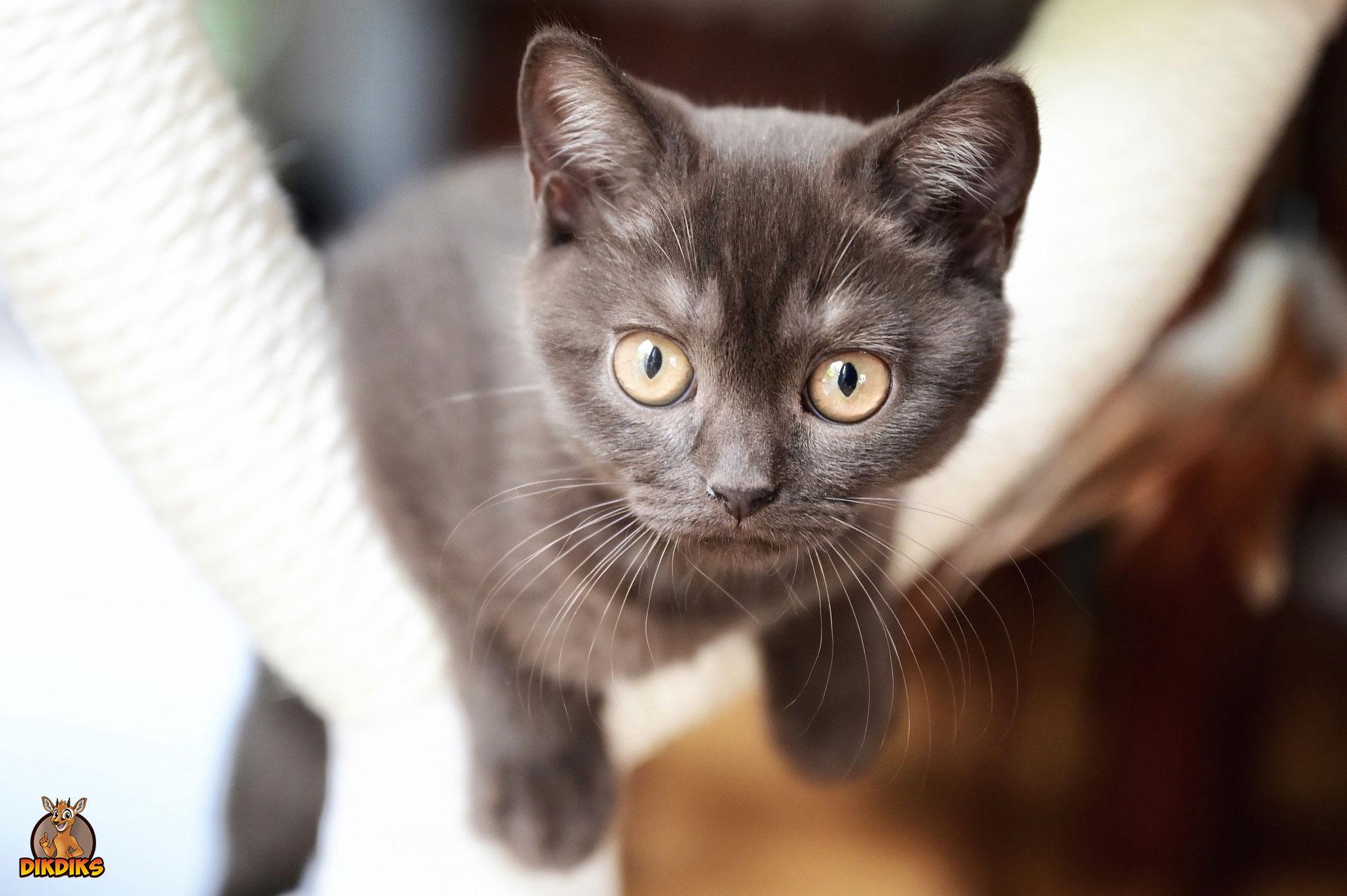 Entwicklung-eines-Kitten