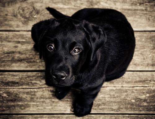 Entwicklung eines Hundebabys – eine aufregende Zeit mit großen Sprüngen