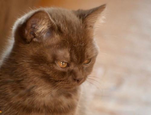 Impfung beim Kitten – Das musst Du jetzt wissen