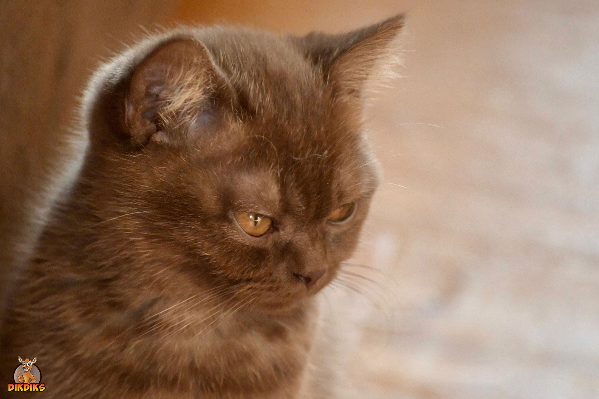 Kitten-impfen