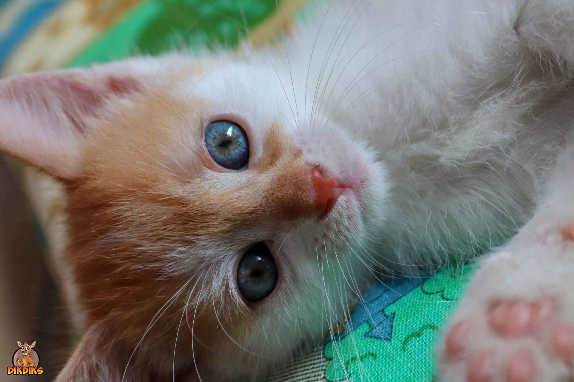 So-entwickelt-sich-ein-Katzenbaby