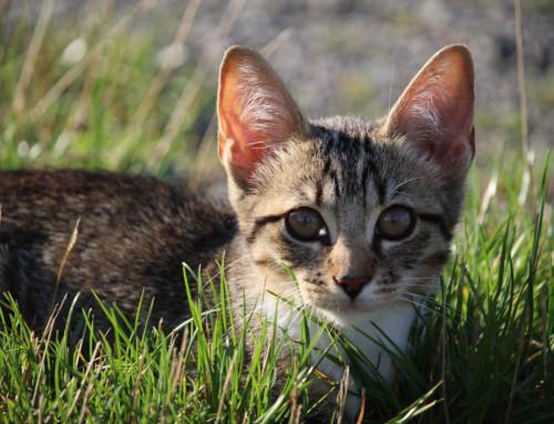 Zahnwechsel beim Kitten – Das solltest Du über die Zahnentwicklung wissen